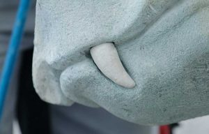 Zahn der Seeschlange in Bad Bayersoien
